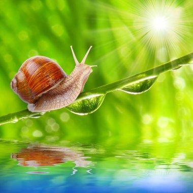 Speedy snail on a dewy grass.