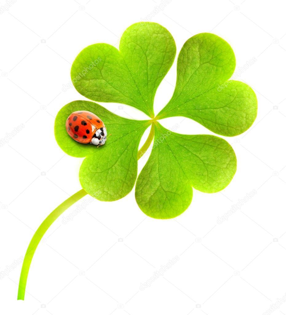 Four leaf clover and ladybug.