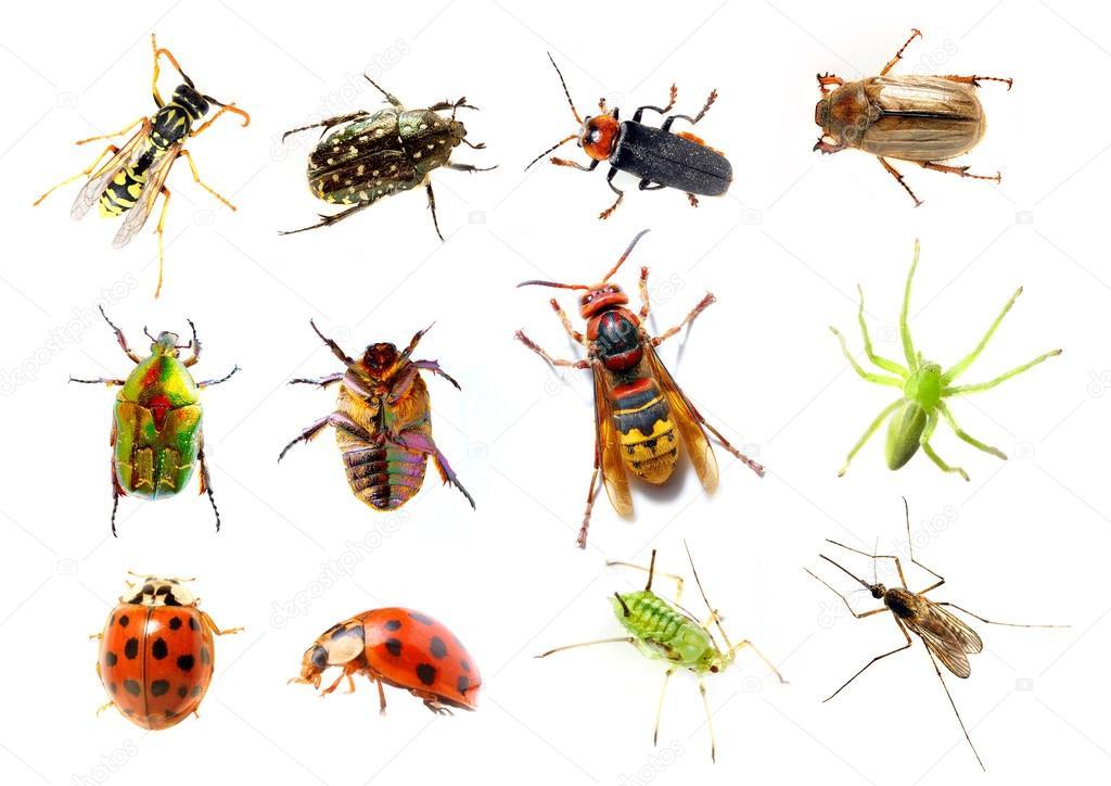 Insectes jardins photographie vladvitek 33578761 - Insectes nuisibles du jardin ...