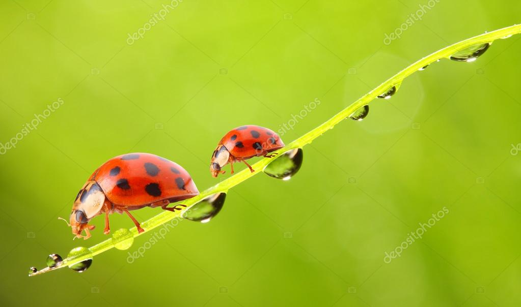 Ladybugs family playing on a daisy flowers.