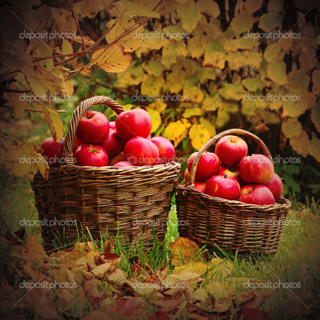 Fresh ripe apples in the basket. Retro style picture