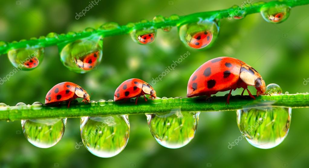 Three ladybugs running on a grass bridge. Close up with shallow DOF.