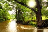 řeka radbuza