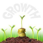 Fotografie Money growth