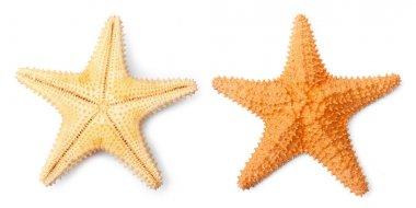 The common Caribbean starfish