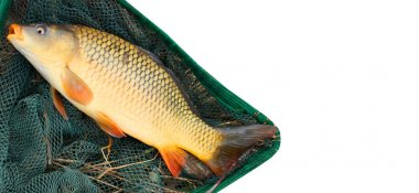 The fish on a landing net closeup stock vector