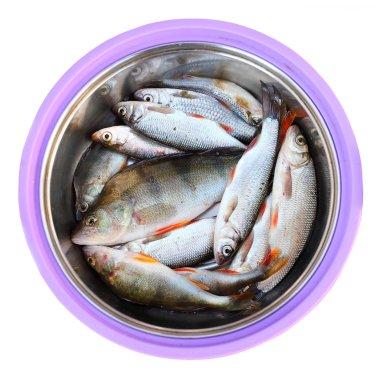 Fish on a dish
