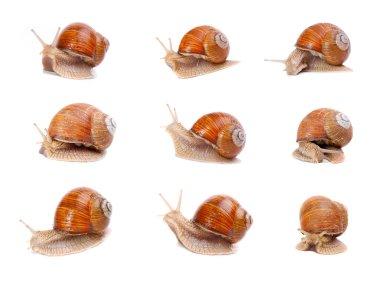 Collection of a garden snails