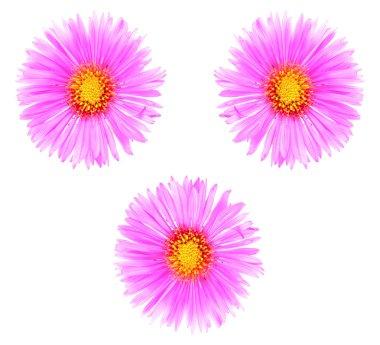Three autumn flowers