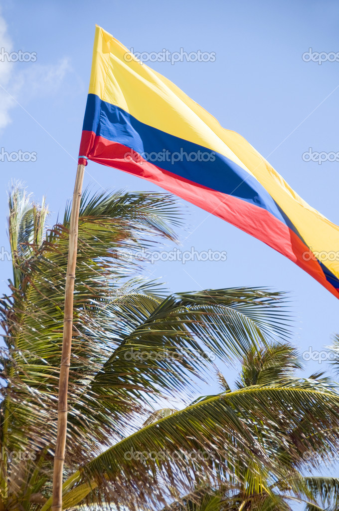 flag of Colombia blowing in breeze palm coconut trees