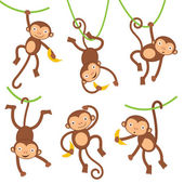 Fotografie Funny monkeys set