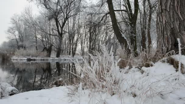 Zimní krajina u řeky Havel (Brandenburg - Německo)