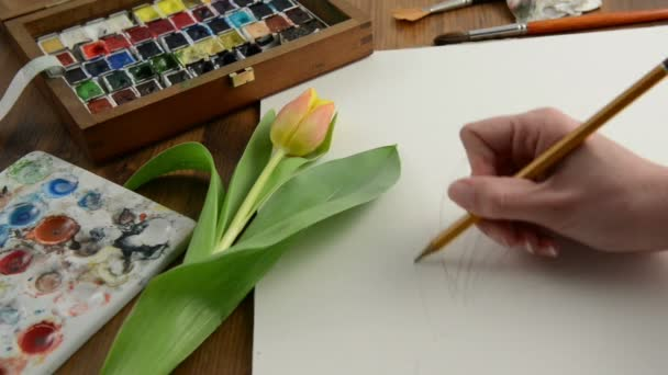 Drawing tulip with a pencil and paint in watercolor painting. Time lapse