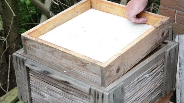 Medové plástve v úlu rámu a včely