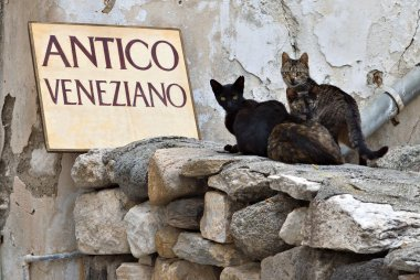 Cats at Naxos island in Greece