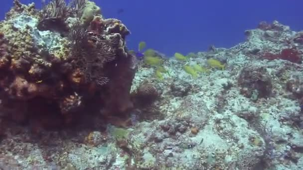 Scuba diving off cozumel island, mexico, one of the worlds favourite dive destinations