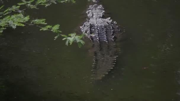 krokodýlů v řece