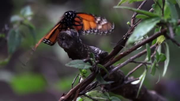 The amazing monarch butterfly sanctuary in mexico