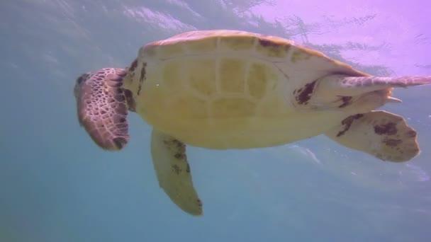 Kareta natočeno pod vodou v Mexiku