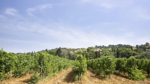 Weinberg in Frankreich