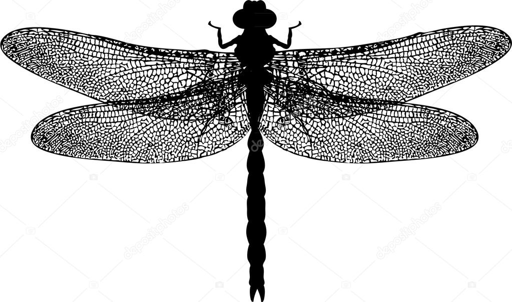 Áˆ Moths Stock Drawings Royalty Free Dragonfly Silhouette Pics Download On Depositphotos Available online silhouette editor before downloading. ᐈ moths stock drawings royalty free dragonfly silhouette pics download on depositphotos