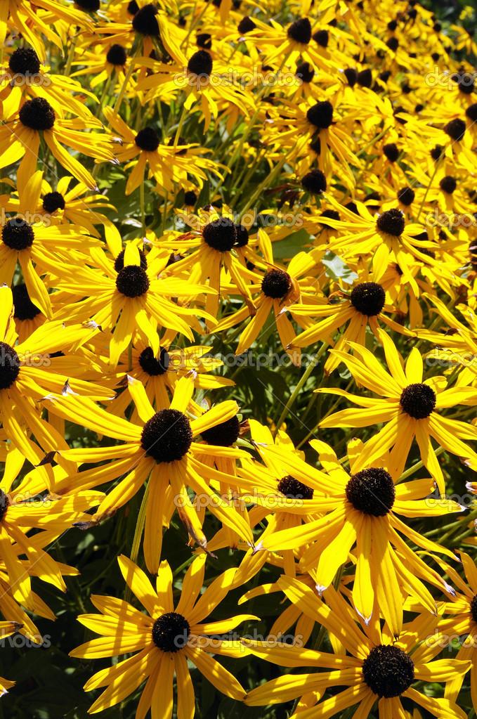 Gelbe Herbstblumen Stockfoto C Nazzu 19127587