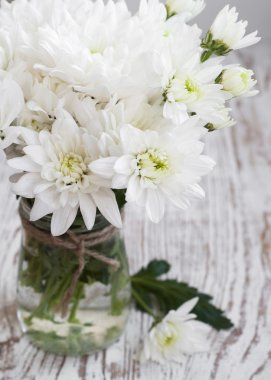 White Chrysanthemum