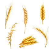 Photo Wheat, vector set