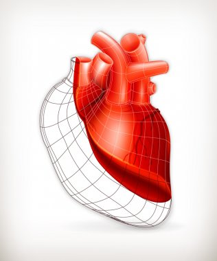 Heart structure, vector