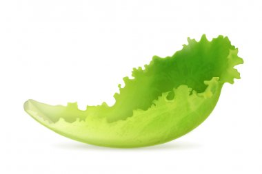 Lettuce, vector