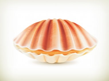 Seashell, high quality vector illustration