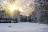 Fényképek naplemente a téli erdő
