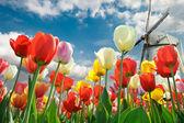 Pestrobarevné tulipány