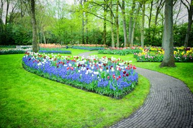 Multicolored tulips in Keukenhof Gardens, Netherlands stock vector