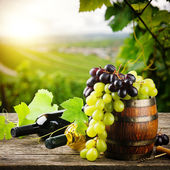 Bottles of red and white wine with fresh grape