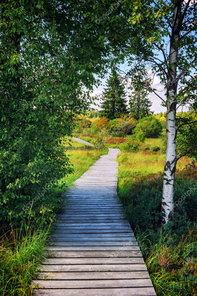 Summer landscape with wooden pathway