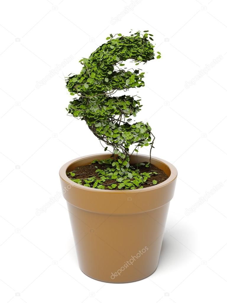 Potted euro plant