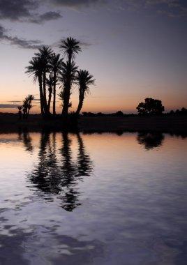 Palm Trees near the Lake at Sunrise