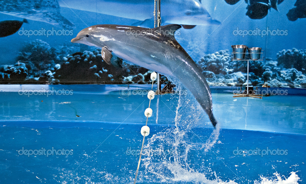 Spectacle With Dolphins In Barcelona S Zoo Stock Photo C Rubiphoto