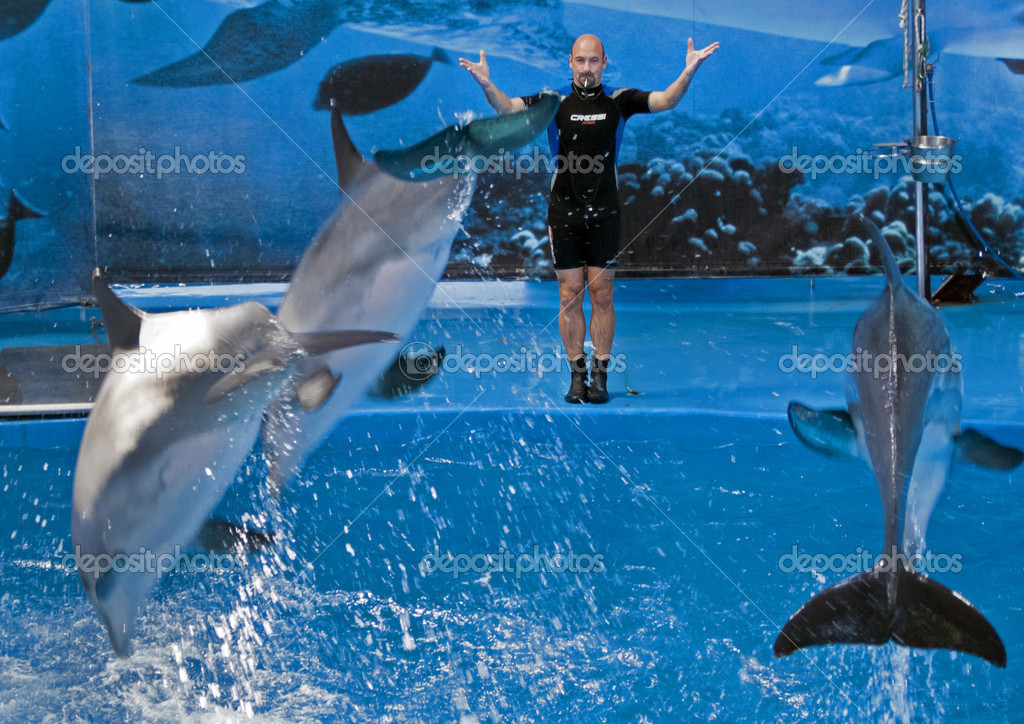 Spectacle With Dolphins In Barcelona S Zoo Stock Editorial Photo