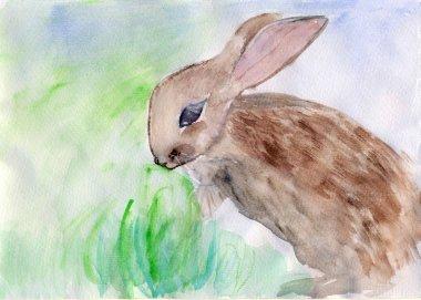 Rabbit,watercolor illustration