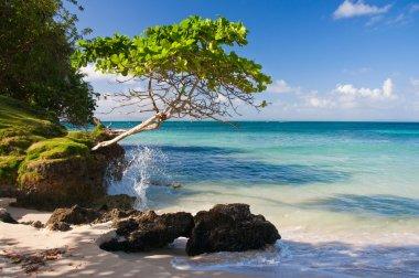 Perfect Beach, Dominican Republic