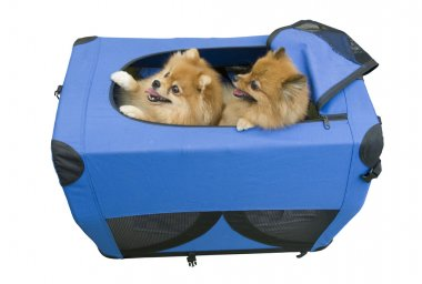 Two dogs in travel case