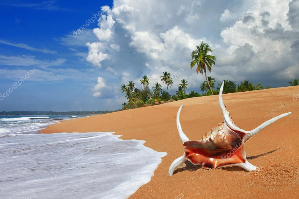 Tropical solitude - beautiful beach scene with sea shell