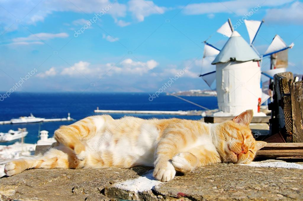 Sleeping cat in Santorini