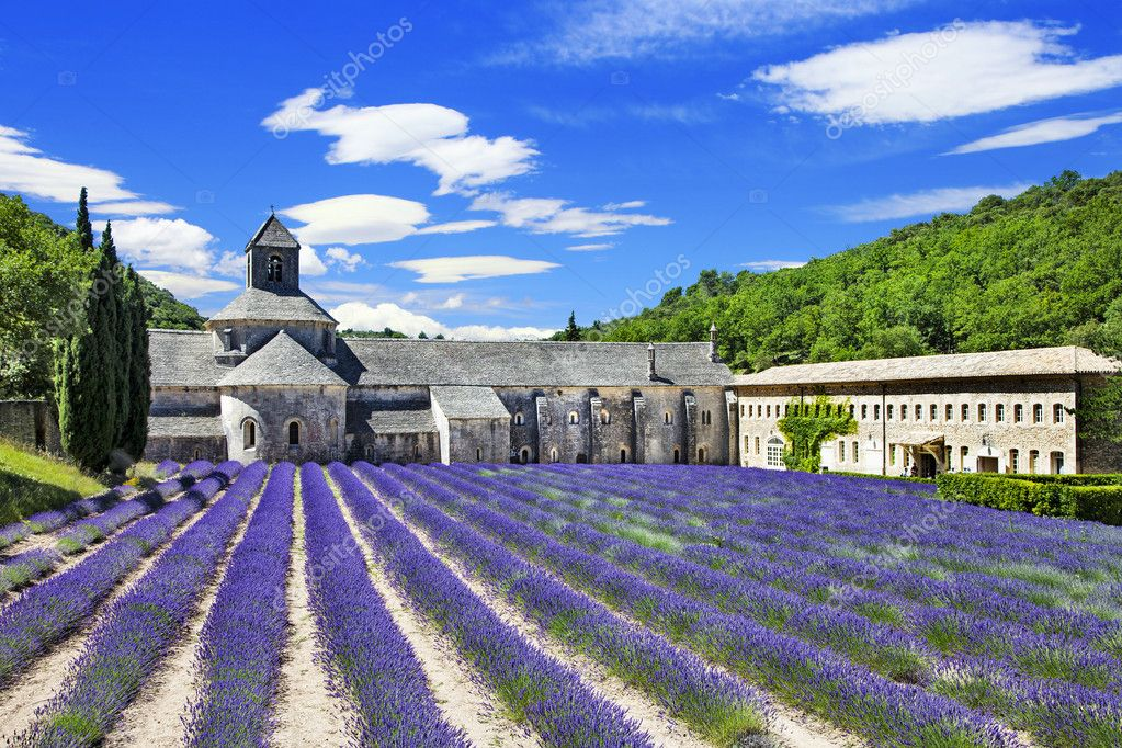 Abbaye de Senanque with blooming lavender field,  Provence, Fran