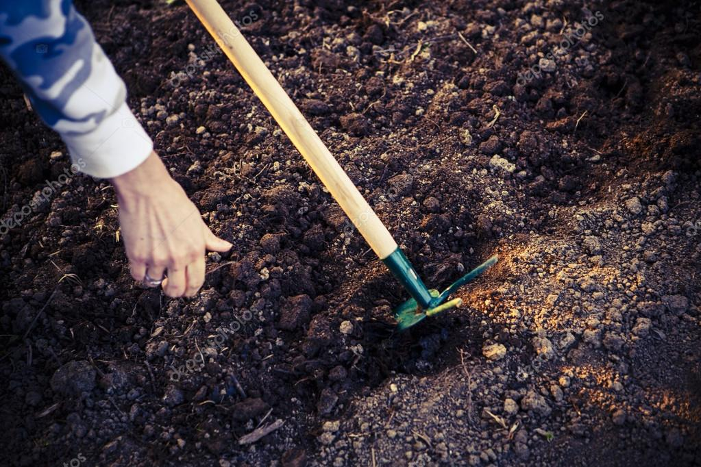 woman hand sowing seed