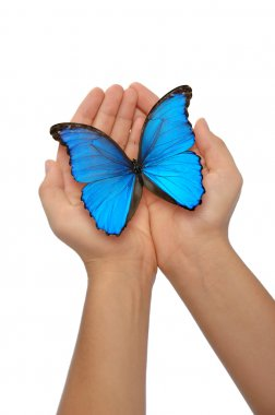 Hands holding a blue butterfly