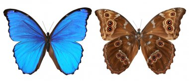 Butterfly top and bottom view