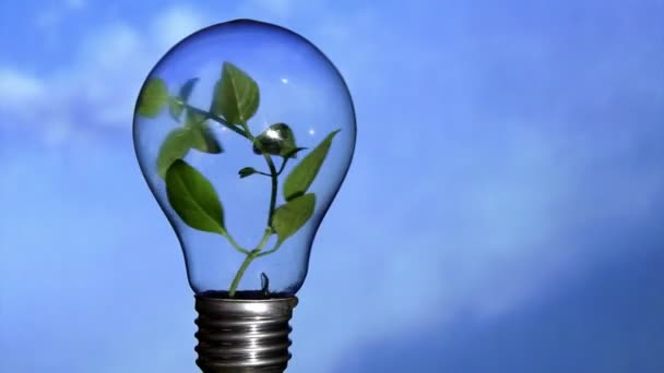 Növény-lámpa, ég